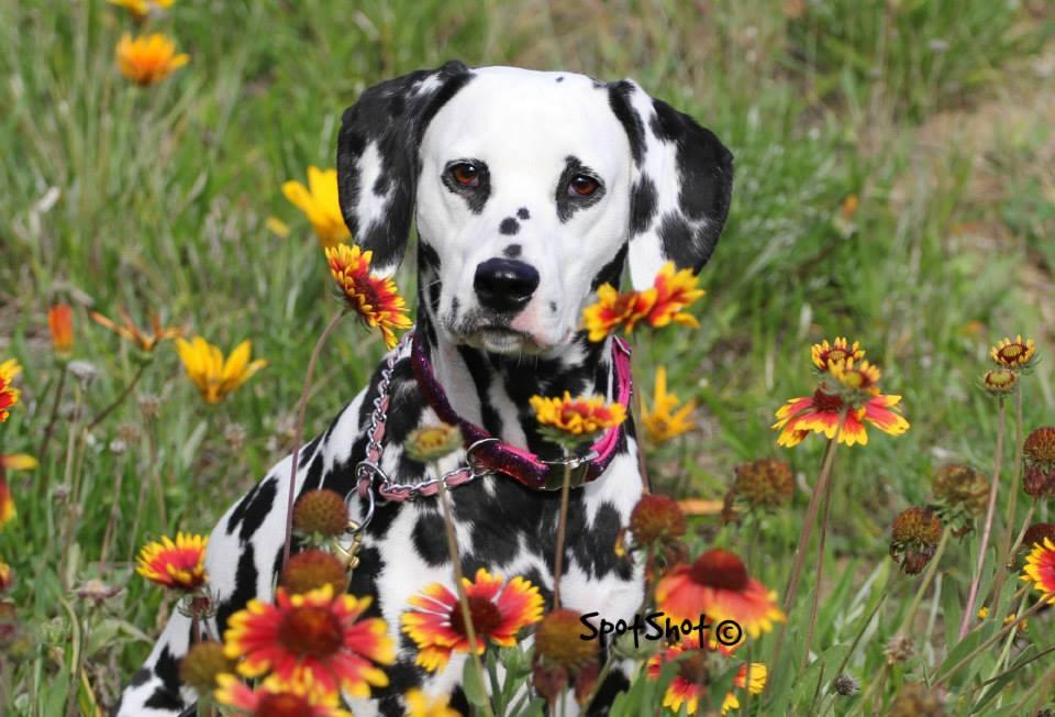 spoiled dog designs chosen as le chien designer spoiled dog designs blog. Black Bedroom Furniture Sets. Home Design Ideas