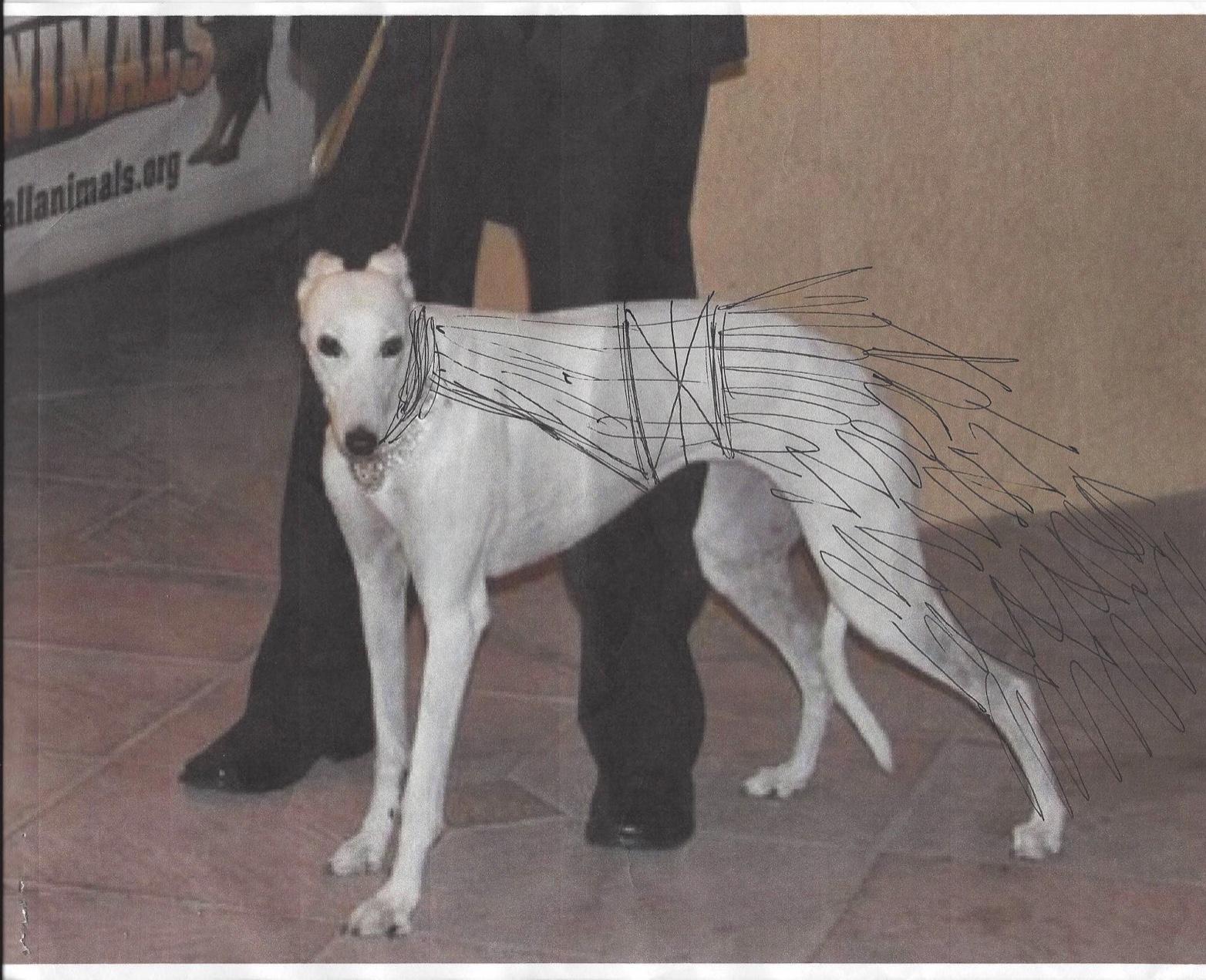 designing for le chien palm springs ca designer dog clothing. Black Bedroom Furniture Sets. Home Design Ideas